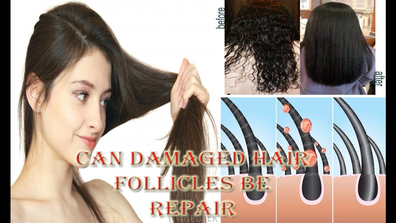 How Can Damaged Hair Be Repair Follicles At Home