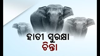 Gambar cover Reporter Live: An Important Meeting Held To Control The Death Of Jumbos In Odisha