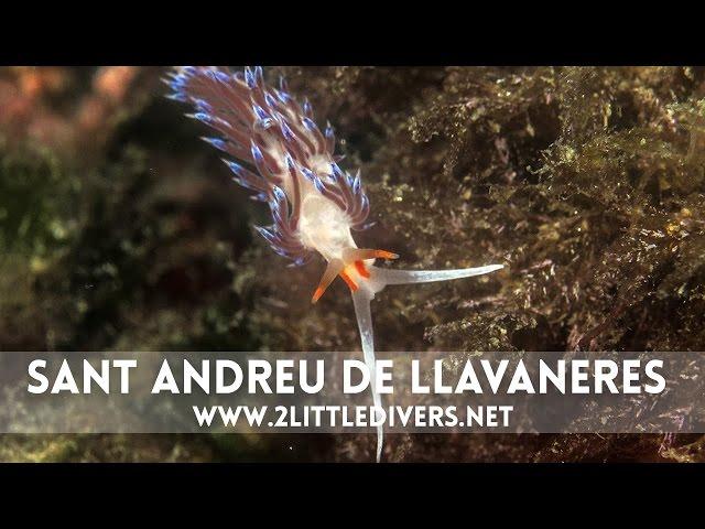 2 Little Divers | Inmersión en Sant Andreu de Llavaneres