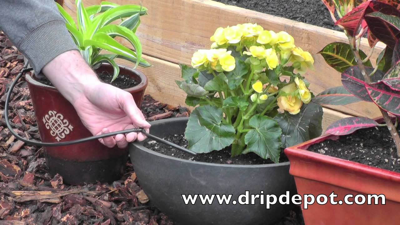 How To Setup A Drip Irrigation System For Potted Plants Using Mircotubing