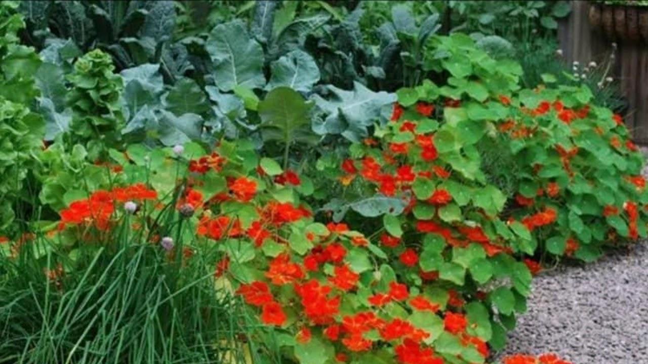 Зачем сажать цветы на овощных грядках?