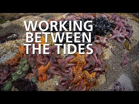 Working Between the Tides