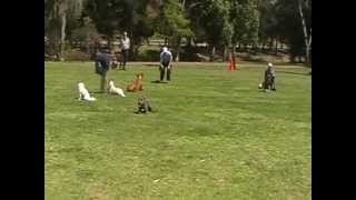 Basic Obedience Class