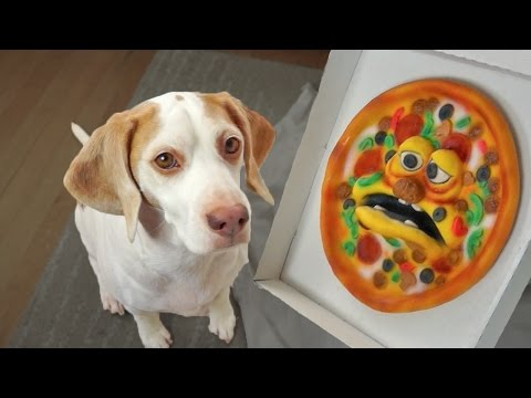 Funny Dog vs. Annoying Pizza Prank: Funny Dog Maymo