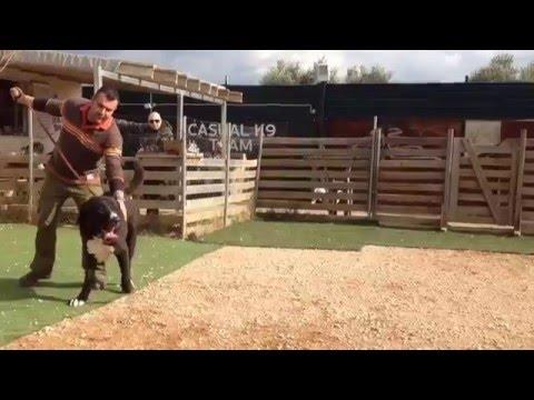 Casual k9'dog training'club ALABAI OF GREECE MEGAS ATTACK STYLE