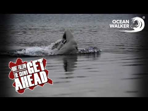 Don't Follow the Crowd - Ocean Walker Technique