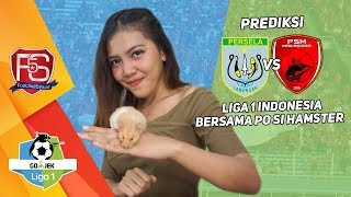 Download Video Prediksi PERSELA VS PSM bersama PO si Hamster MP3 3GP MP4