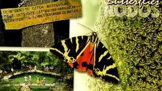 RHODES Valley of Butterflies (fotos and video), Долина Бабочек фото+видео(The popular natural park in Rhodes Island Greece, the Butterfly valley, introduced in full hd video. Одно из наиболее популярных на Родосе мест -- Петалуд..., 2013-08-06T12:15:45.000Z)