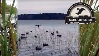 Охота на утку с манком видео