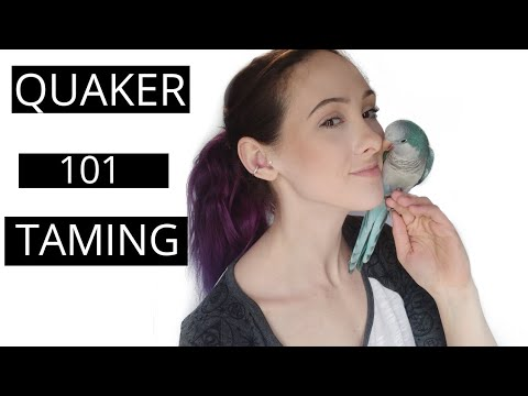 How To Tame And Bond With Your Quaker Parrot | Parrot Tips And Tricks