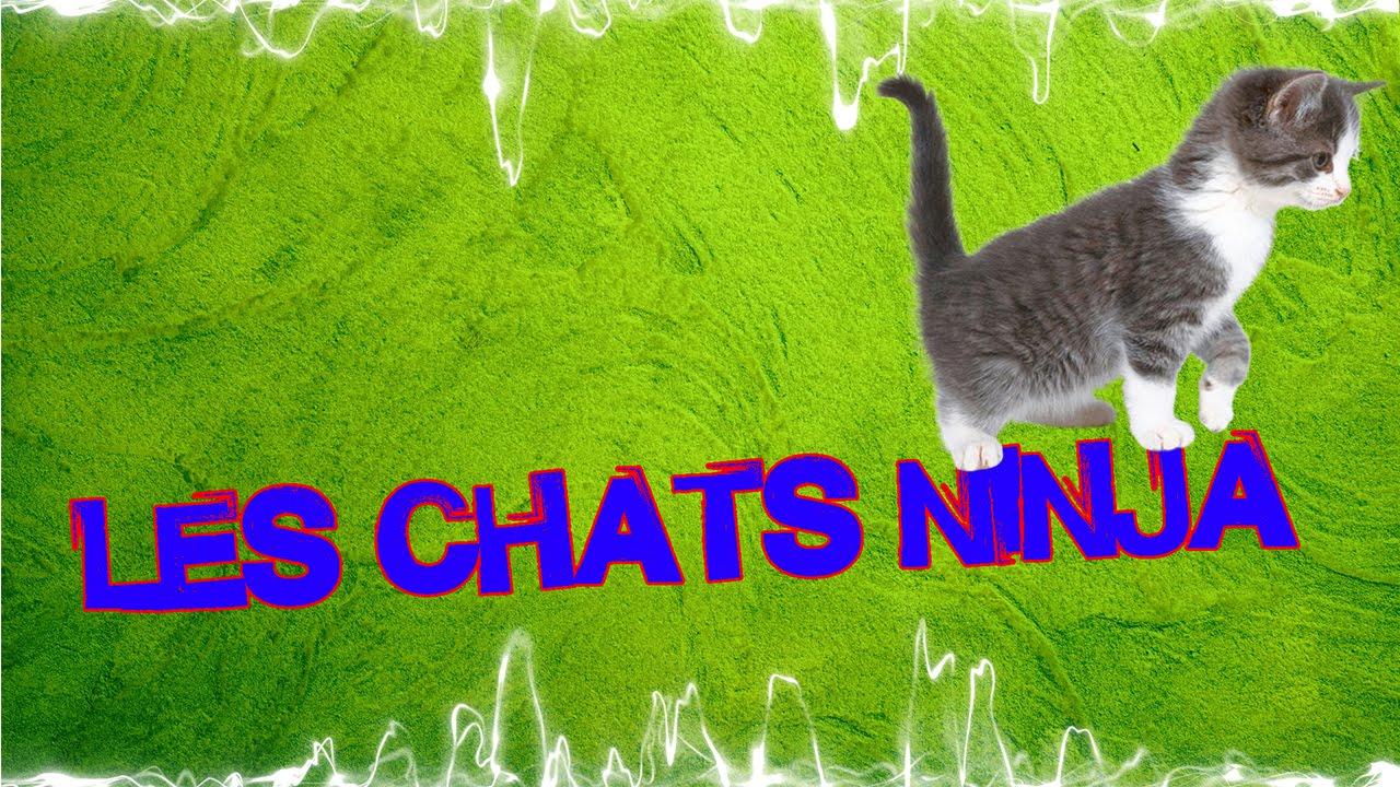 BANDE ANNONCE , Les chats ninja 2