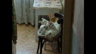 Белоснежные котята и пёстрая красотка