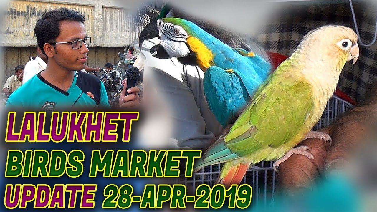 Exotic Birds For Sale >> Laluket Sunday Birds Market Exotic Birds For Sale 28 4 2019 Jamshed Asmi Informative Channel