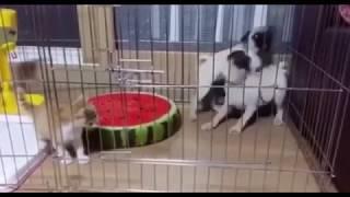 Video 1 video lucu terbaru bikin ngakak anjing takut kucing download MP3, 3GP, MP4, WEBM, AVI, FLV Februari 2018
