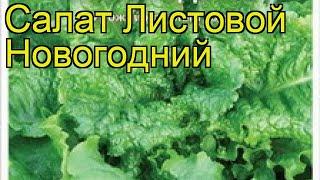 Салат листовой Новогодний. Краткий обзор, описание характеристик, где купить семена lactuca sativa