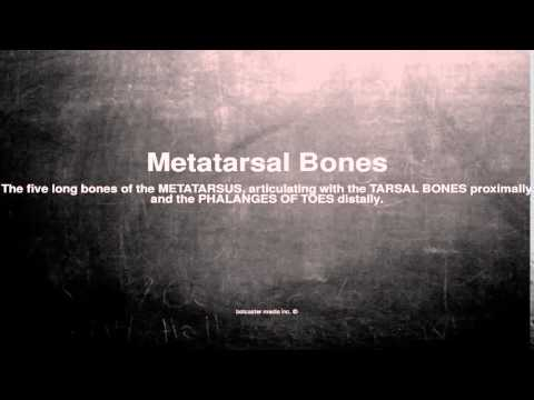Medical vocabulary: What does Metatarsal Bones mean