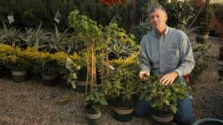 How to Protect Raspberries  Professional Gardening Tips
