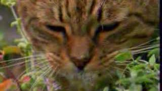 кошки наркоманки