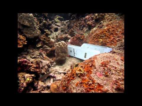 Koh Tao Marine Problems - Conservation Focus