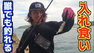突然無性に食べたくなるあの魚を沢山釣ろう!! thumbnail