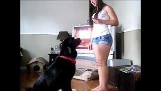 Repeat youtube video Mon chien, mon amour