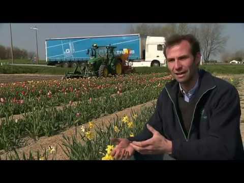 Les champs de fleurs en libre service poussent un peu