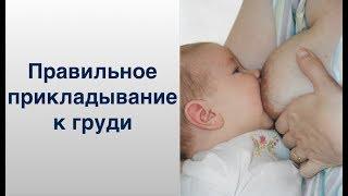 Правильное прикладывание малыша к груди