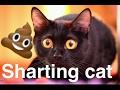 Sharting cat?- Free Ice Cream