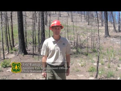Fire Benefits to the Aspen Ecosystem, one year after the Shingle Fire