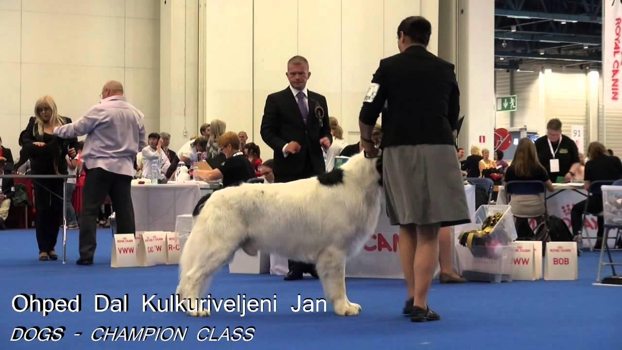 World Dog Show (World Dog Championship) in 2018 40