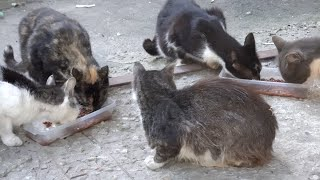 Five cats and a black kitten