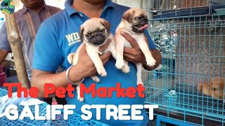 A Short Trip To Galiff Street Kolkata- Street Pet Market | By CapTain MotoHolic
