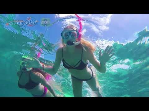 Ocean Safari | Great Barrier Reef Adventure from Cape Tribulation | Experience Oz