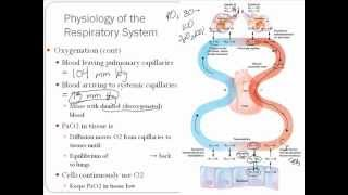 Brief Physiology of Oxygenation