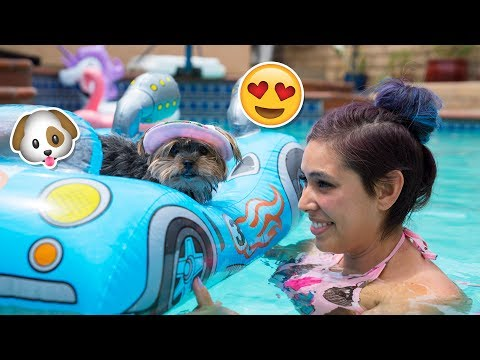 Thumbnail: Buying My Dog Baby Pool Toys