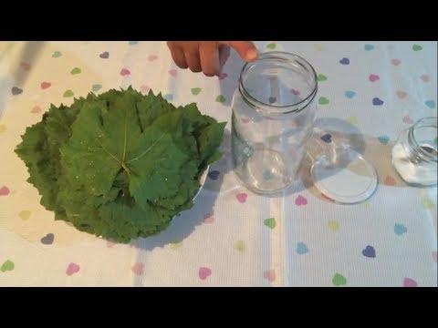 Salamur Yaprak Nasıl Yapılır - Üzüm Yaprak Salamura Tarifi
