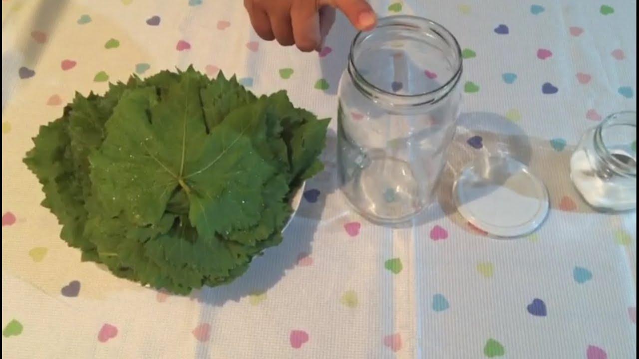 Salamura Yaprak Tuzu Nasıl Giderilir