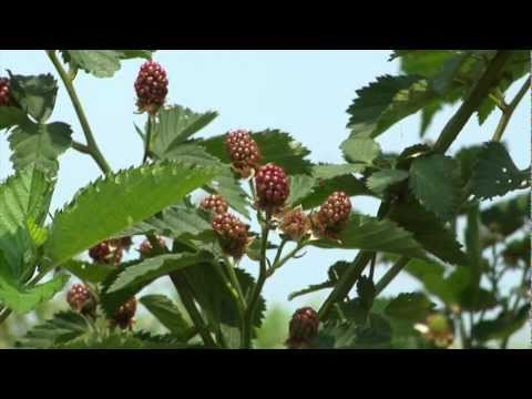 Gardening Guide #10: Edible Landscapes