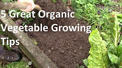 5 of the Best Organic Vegetable Growing tips