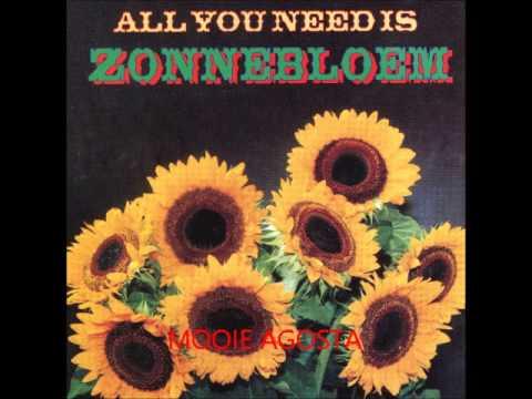 Zonnebloem - Mooie Agosta
