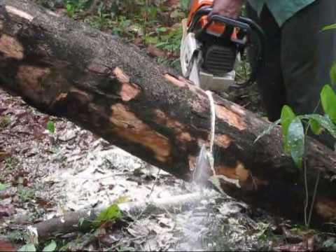 Stihl Ms460 With Carlton Chipper Chain Cutting Rubber Wood