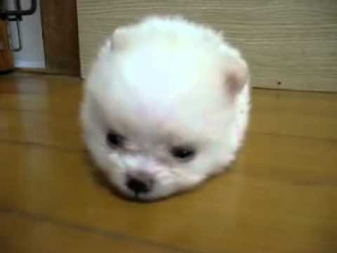 Cotton ball doggy! - YouTube
