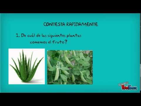 Las plantas y su utilidad youtube for Todas las plantas son ornamentales