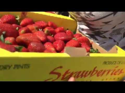 Vegan Electricians @ Los Angeles WholeSale Produce Market Raw Food Super Haul  Easy, Economical & Ef