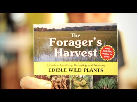 How To Get Started in Foraging - Best Book for Wild Edible Plants