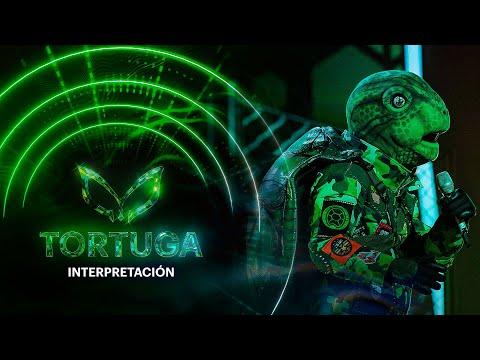 #TortugaEs ¿Tortuga es amigo de los investigadores?   ¿Quién es la Máscara? 2020