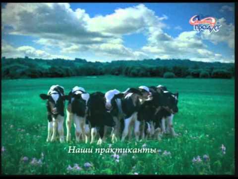 «Греческий йогурт» от компании «Савушкин продукт» победил