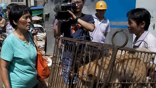 Would You Eat Dog Meat?