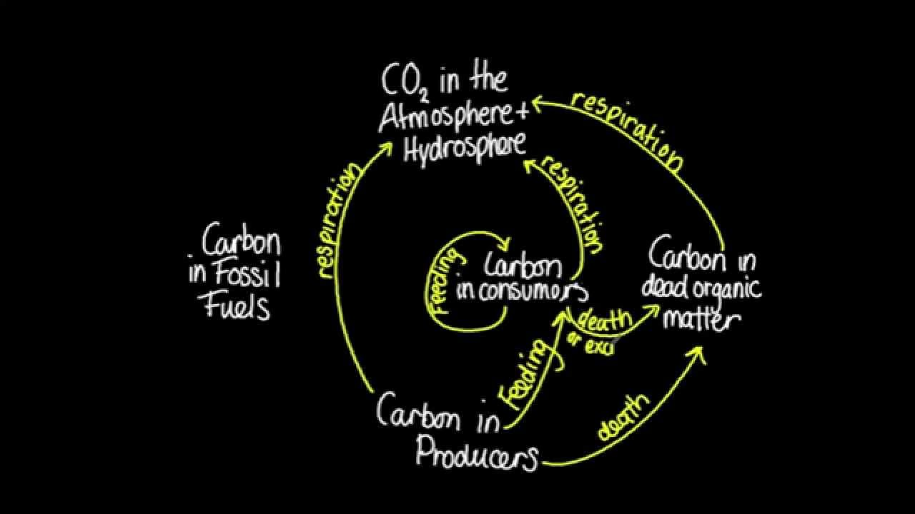 43 skill construct a diagram of the carbon cycle youtube 43 skill construct a diagram of the carbon cycle ccuart Choice Image