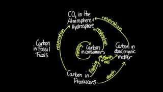 4.3 Skill: Construct a diagram of the carbon cycle